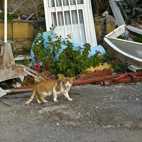 Big Ginger_Northern Cyprus 2009