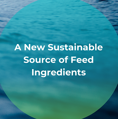 A new sustainable source of feed ingredi