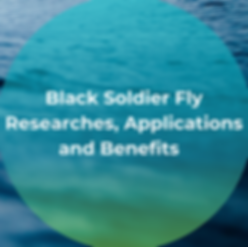 Black soldier fly researches application