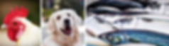 Linkedin Banner big.png