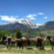 horse-riding-colorado-5.jpg
