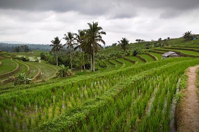 Jatiluwih, Indonésie.