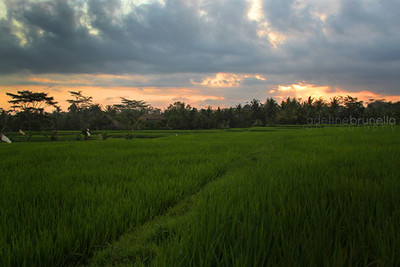 Ubud, Indonésie.