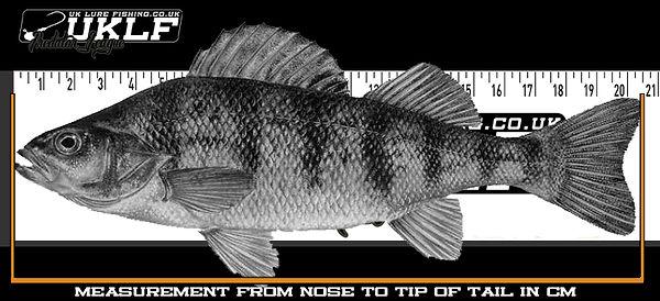 fish-measure.jpg