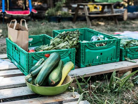"""Workshop: RESTLOS GLÜCKLICH gegen """"Food-Waste"""""""