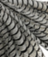 Natural Zebra Black And White Lady Amher