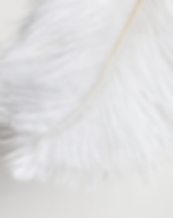 Bleached-White-Ostrich-Feathers.png