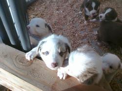 Nov Puppies - 4 weeks 4.jpg