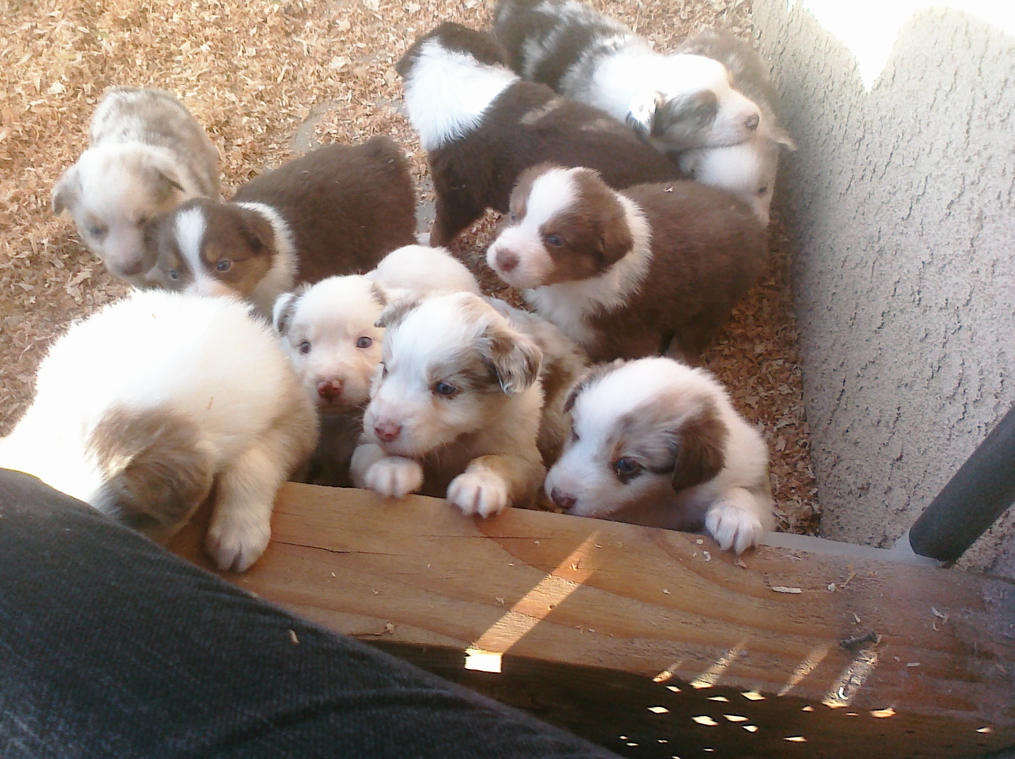 Nov Puppies - 4 weeks 14.jpg