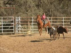 Codie sorting cattle 111112.jpg