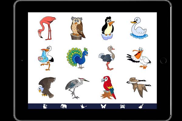 IPad-WildBirds.png