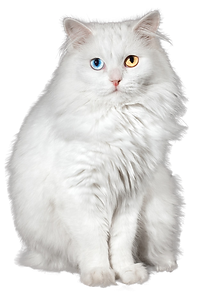 Cat_white.png