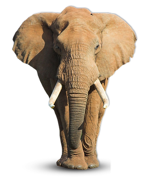 Elephant_shadow.png