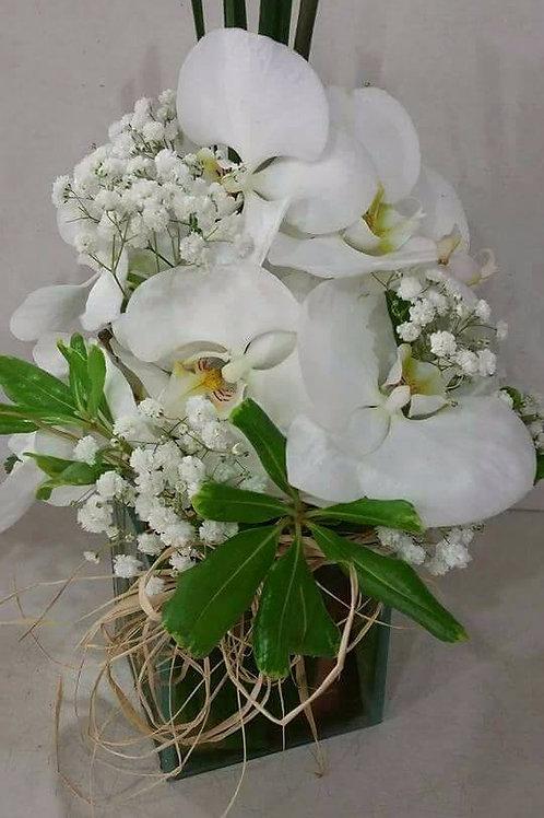 Arranjo orquídeas brancas