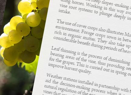Traduction pour Vins et Viticulture Bio