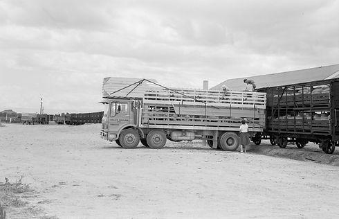 S33473_Sheep_trucks.jpg