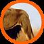 Lion_feature_04.png