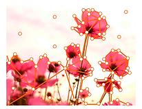 Flowers_NeuralNet.png