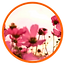 Flowers_feature_04.png
