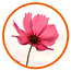 Flowers_feature_05.png