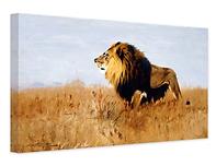 Lion_No-NeuralNet.png