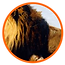 Lion_feature_01.png