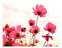 Flowers_No-NeuralNet.png