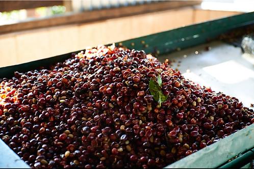 Nicaragua SOE Cafetos de Segovia - Finca Las Golondrinas - Red Catuai - Washed