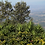 Thumbnail: El Salvador Madre Tierra Thelma Gutierrez Honey
