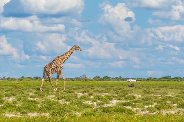 5 Lugares imperdíveis na Namíbia
