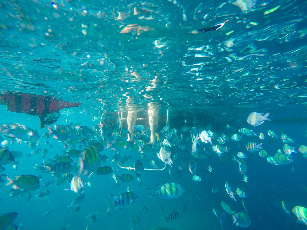 mar peixes