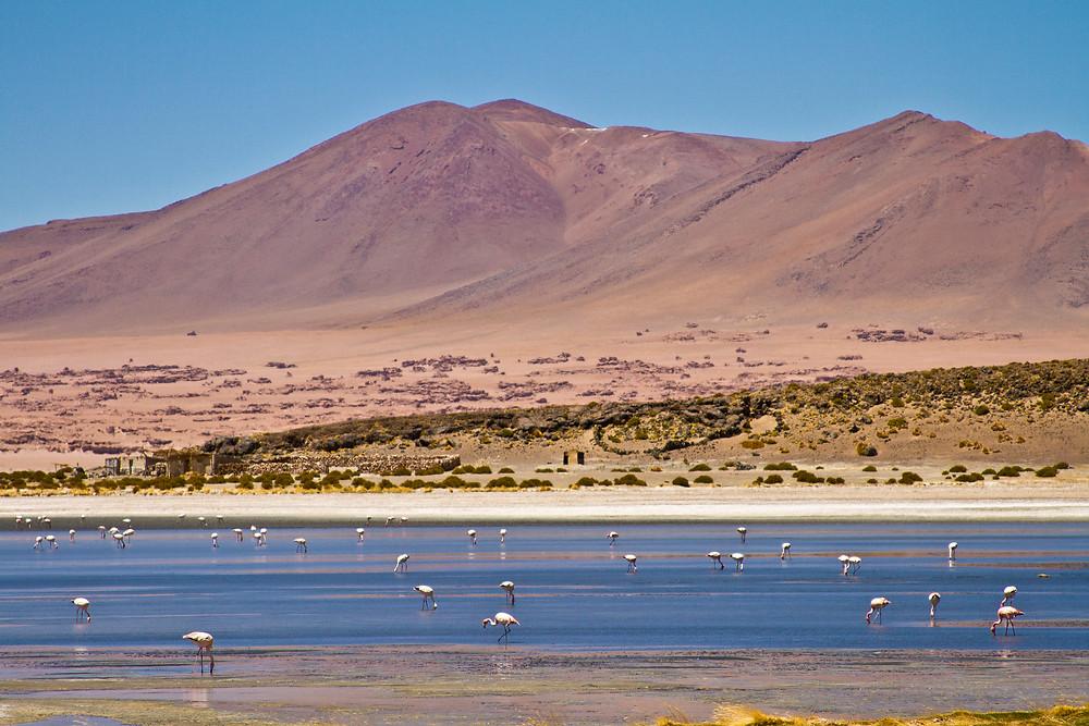 lagoa flamingos
