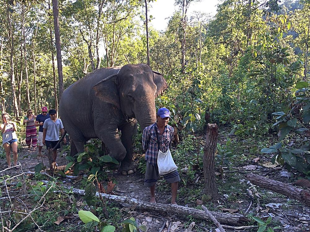 Elefantes floresta