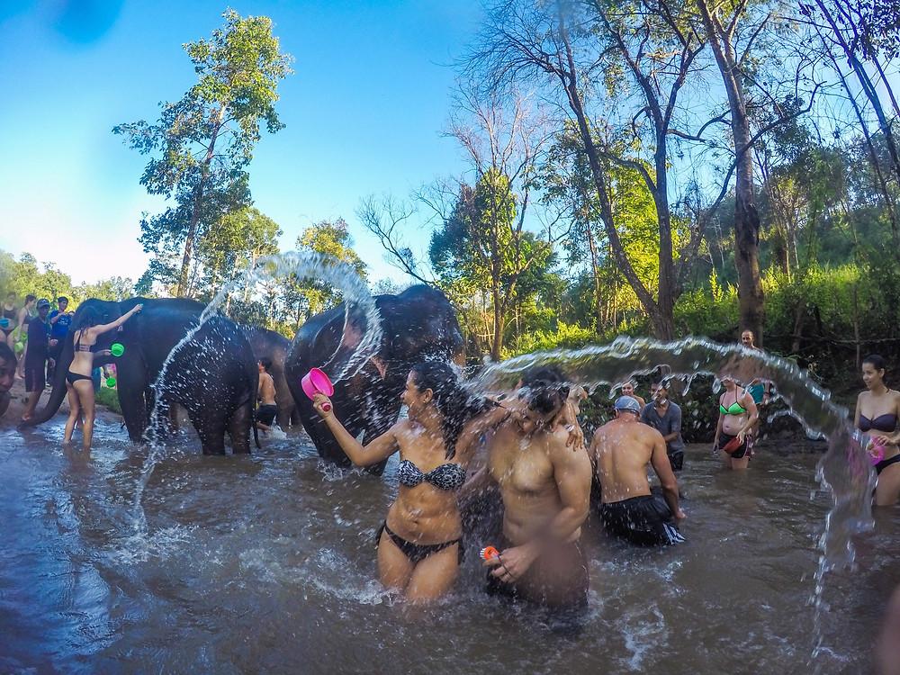 elefantes rio