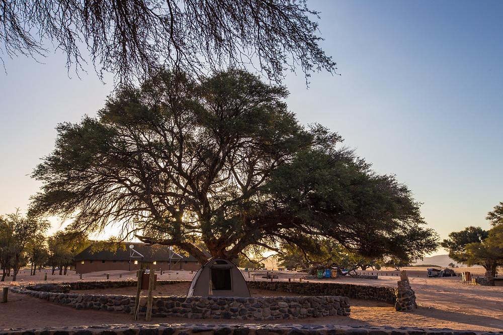 camping árvore