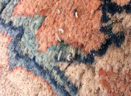 New Dimension - Boston Rug Cleaning Company Cares For Moth Infested Wool Rug.