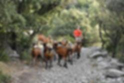 Chèvres 01.jpg