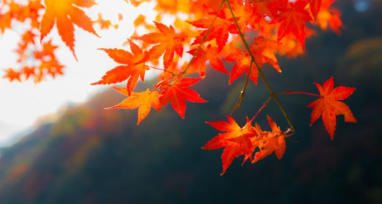 Ten Ways To care for Vata  In The Fall