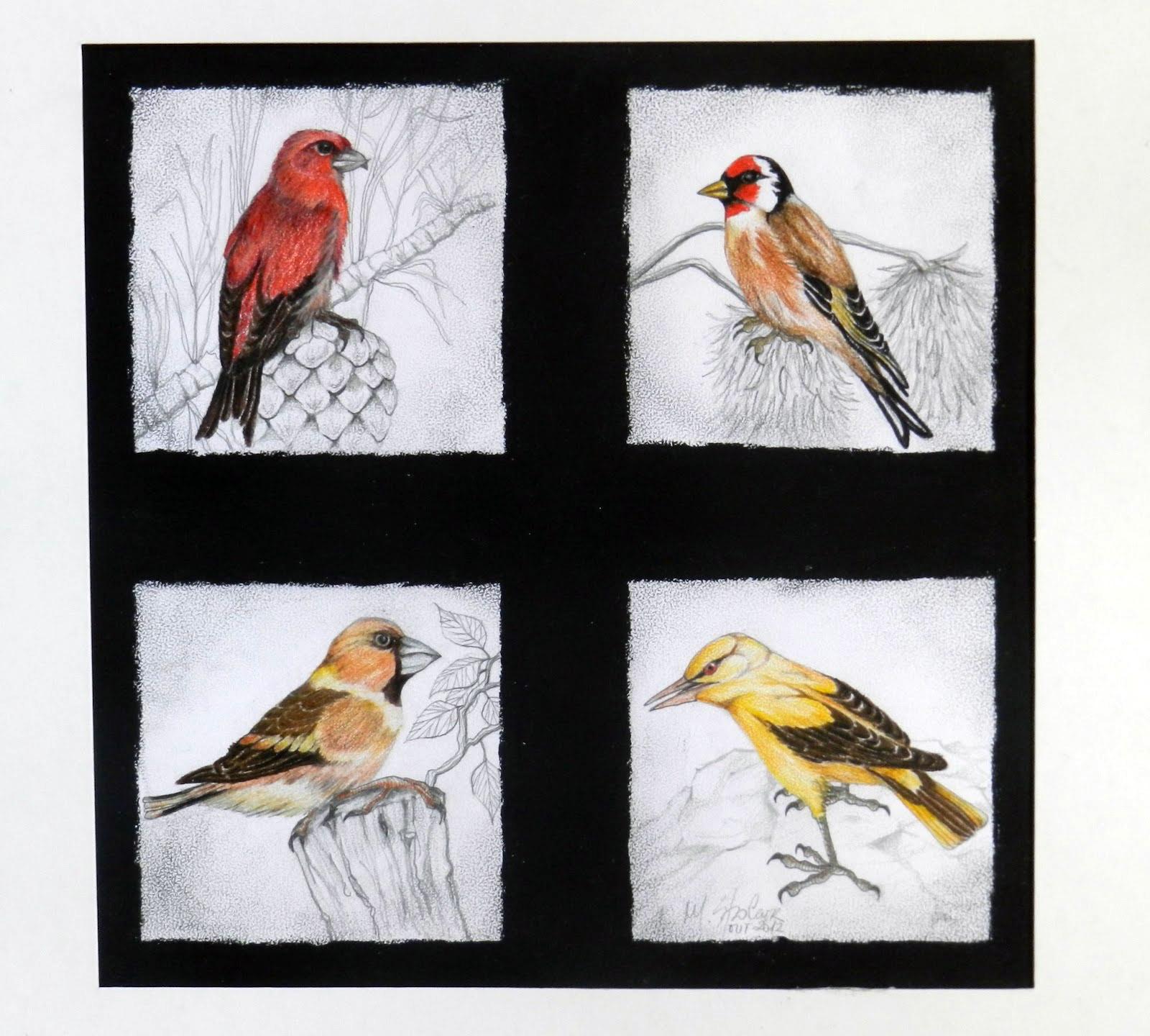 Quarteto de pássaros
