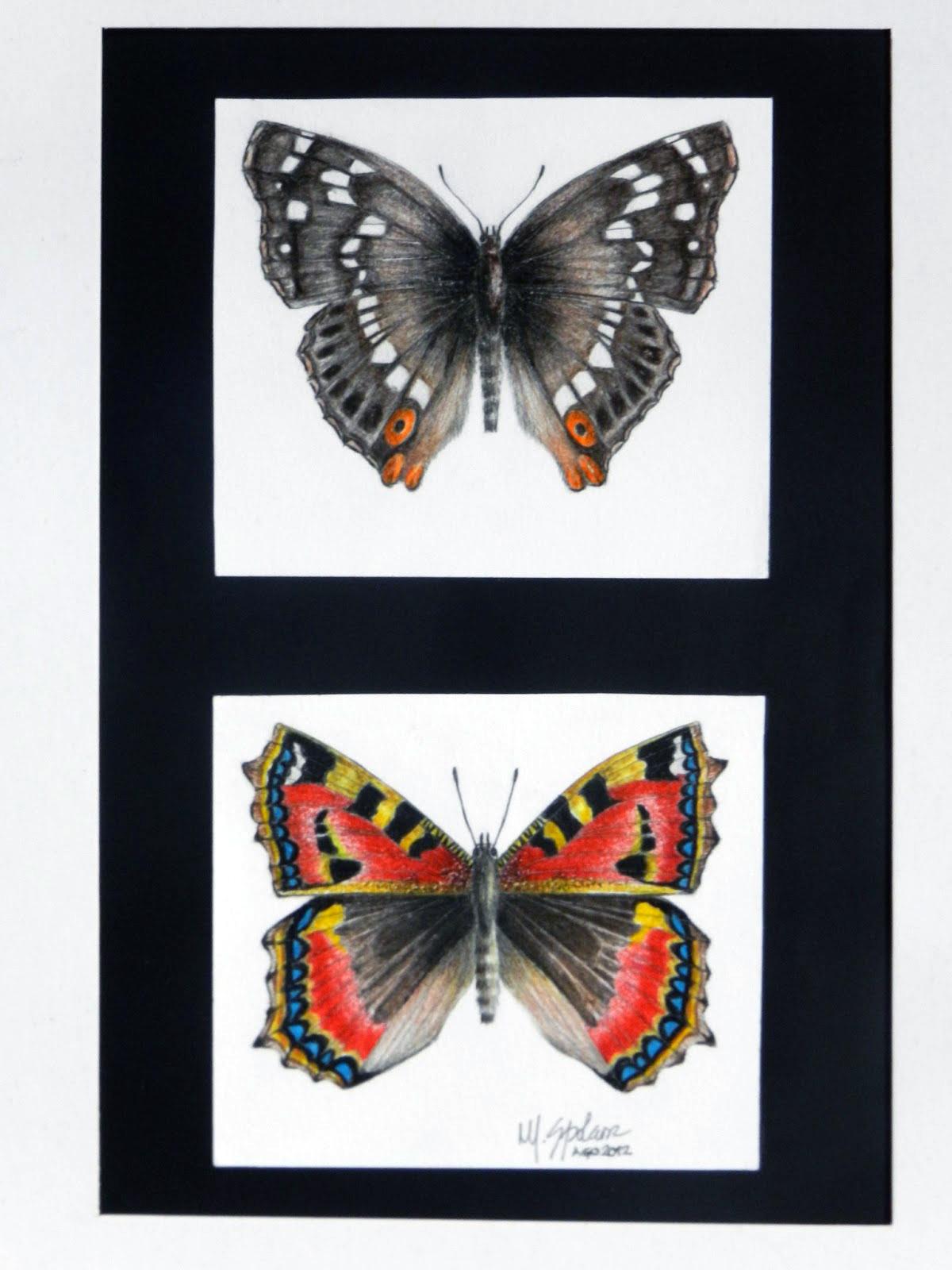 2 borboletas gigantes