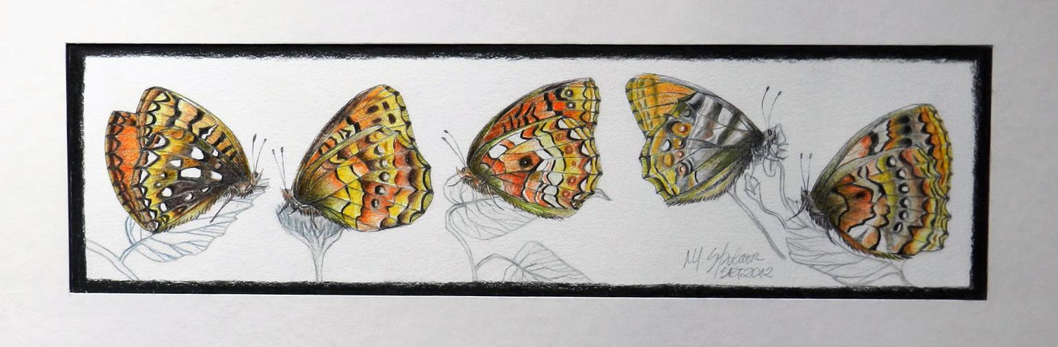 5 borboletas com textura exótica