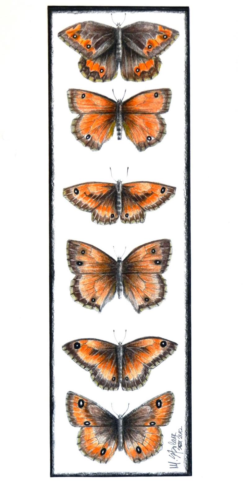6 borboletas laranjas
