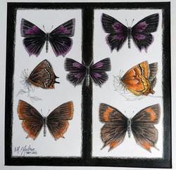 7 borboletas