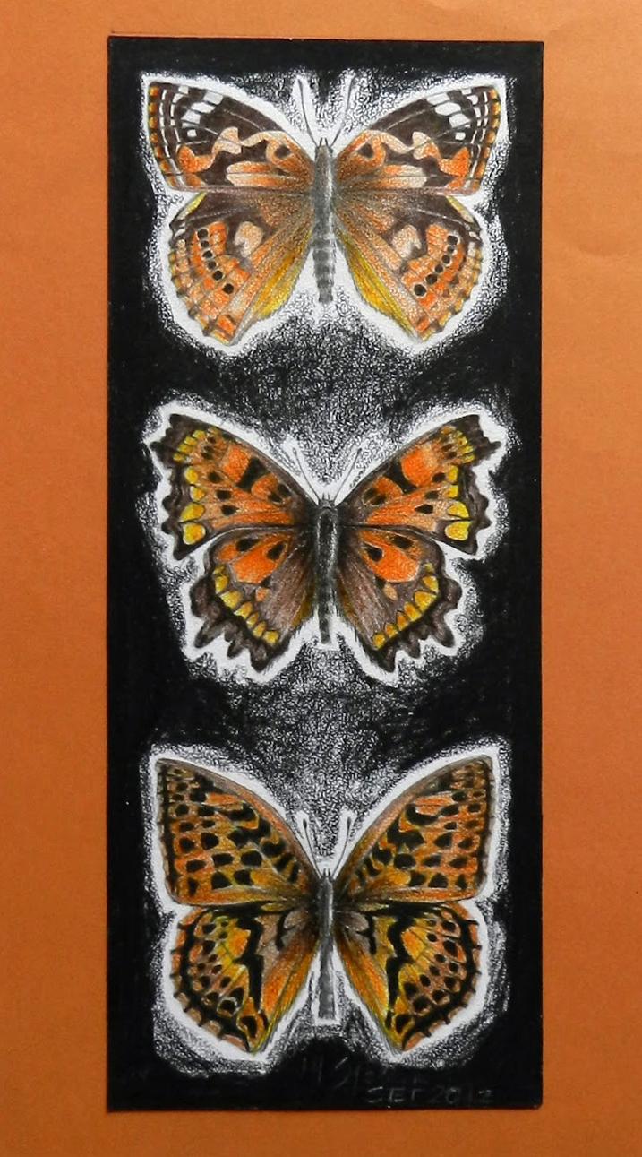 3 borboletas exóticas