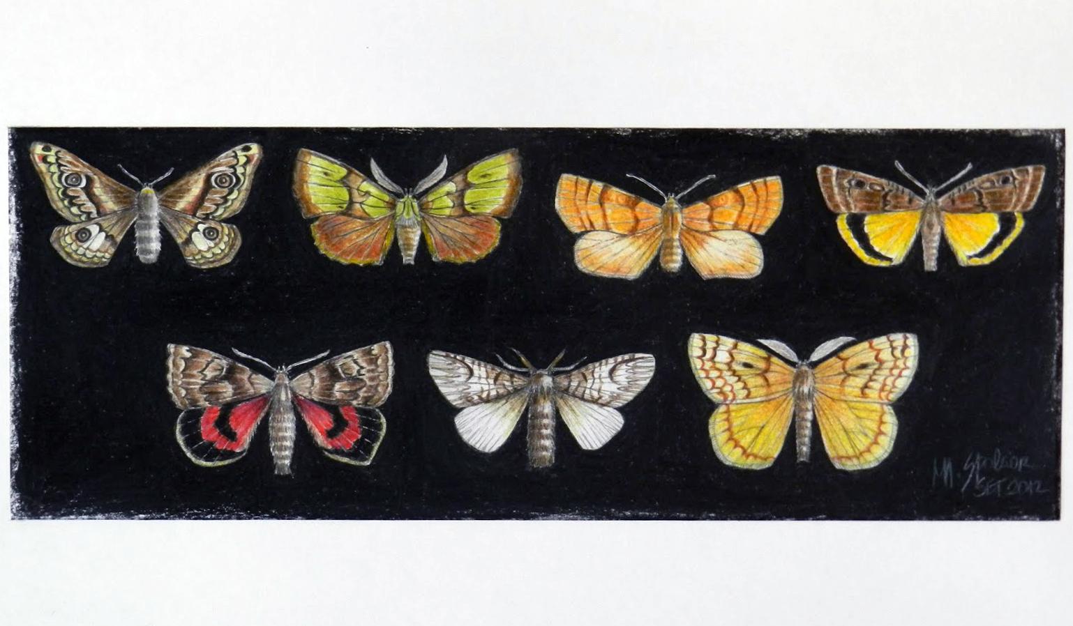 7 mariposas em fundo preto