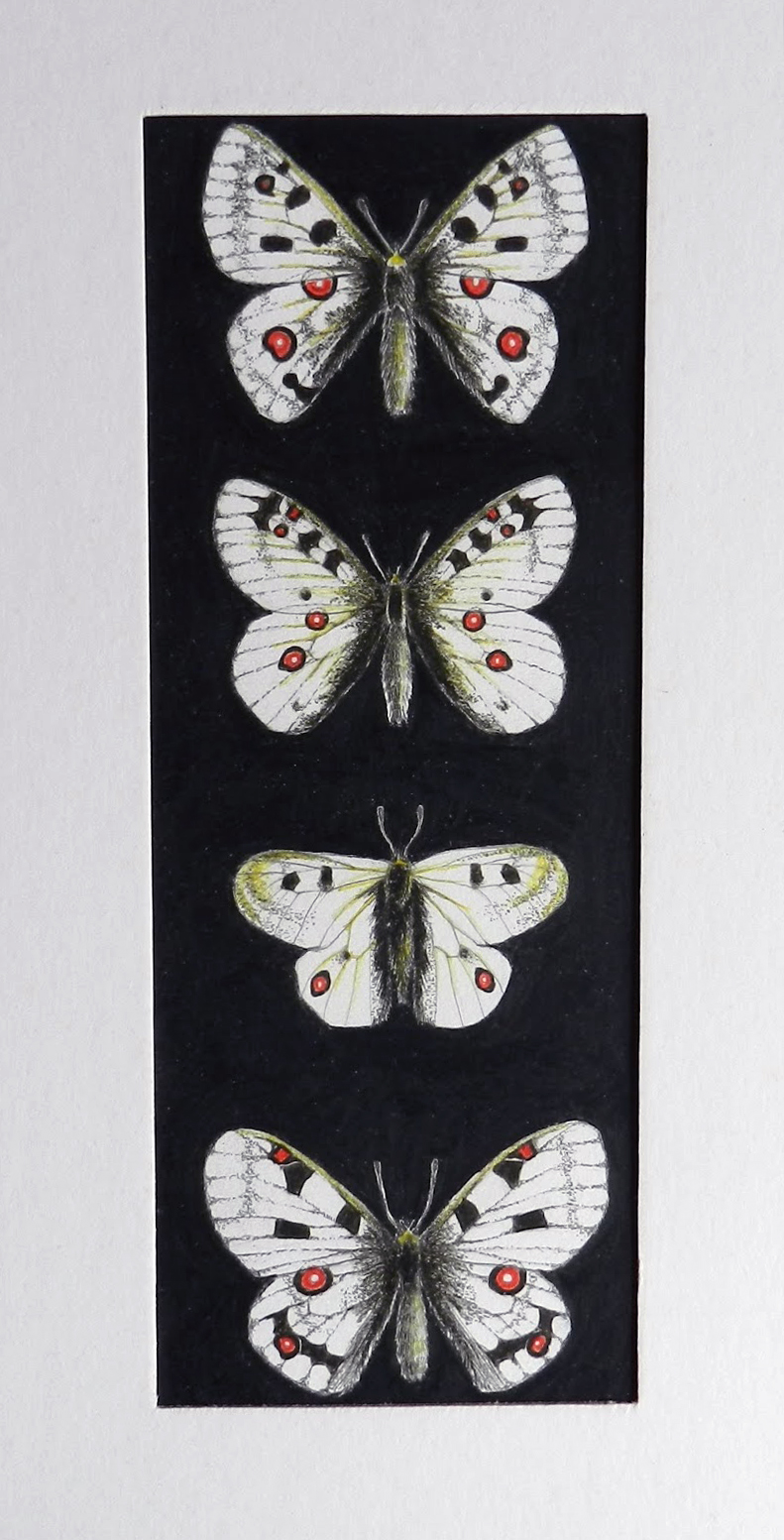 4 borboletas brancas pintadas