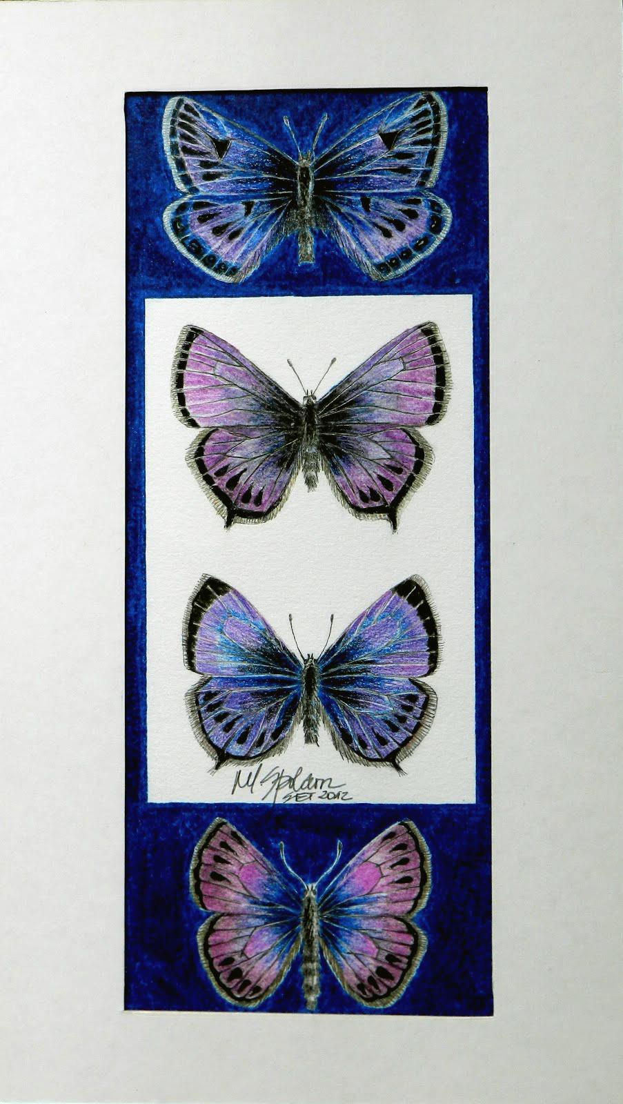 4 borboletas azuis