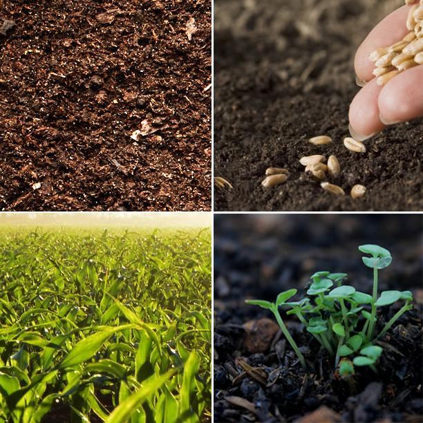 Four Fields to Kingdom Growth (天國成長