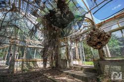 greenhouse-3 copy