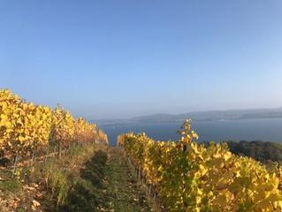 Nos vins élevés en bio-dynamie vous attendent !